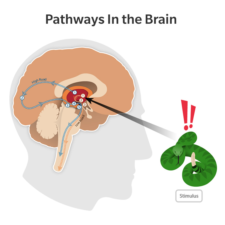 Pathways In the Brain Infographic